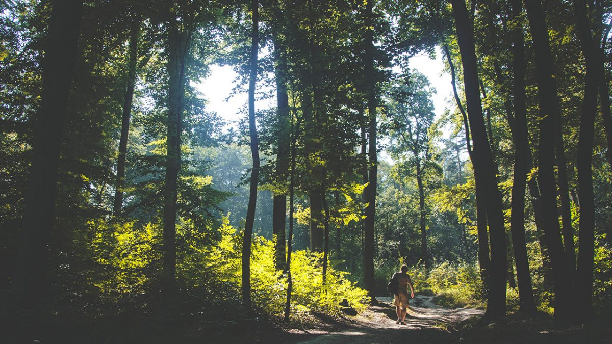 mindpunk.de - 7 Tipps, wie du mit Walking Meditation deinen Stress abschüttelst